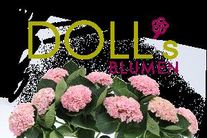 Dolls Blumen